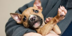 cute puppy laying in the arms of a staff member