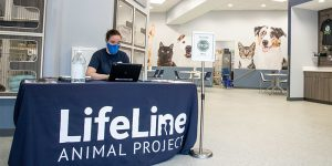 inside the community animal center lobby, a staff member sits at a desk with her mask on