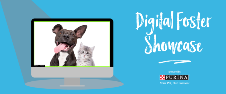 foster dog and cat on computer screen