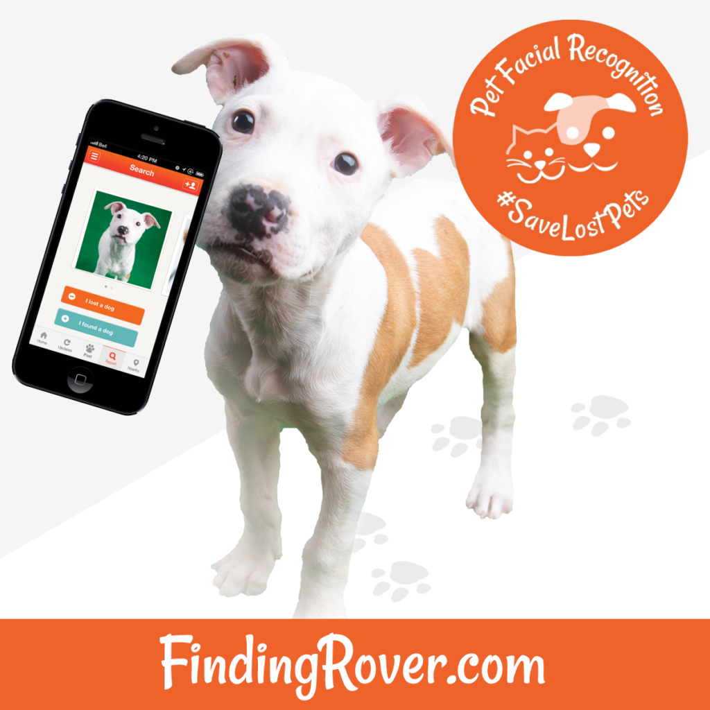 finding rover facial recognition tool to help lost pets get home