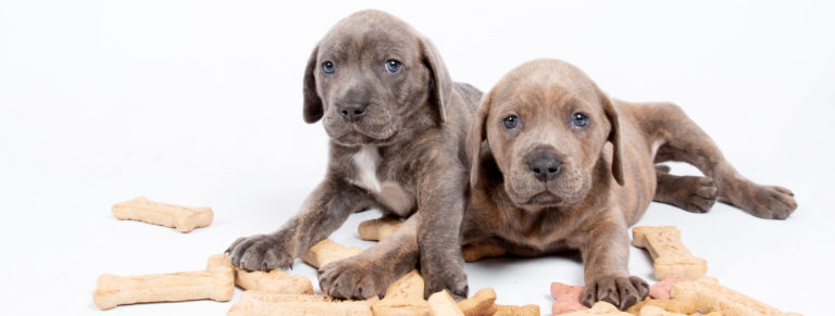 Two puppies with milkbones