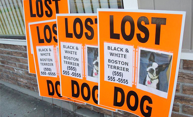 Lost dog pet posters