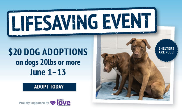 adopt a dog over 20 pounds for $20 from June 1st through the 13th