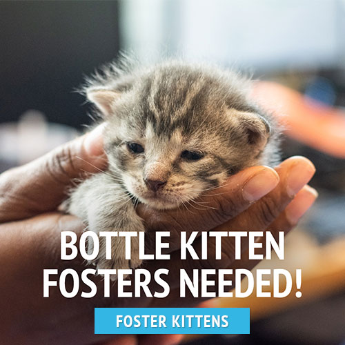 bottle kitten fosters urgently needed!