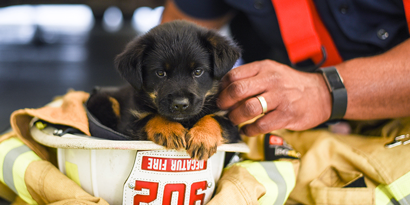 cute black puppy sitting in a firefighter helmet while being pet by a firefighter