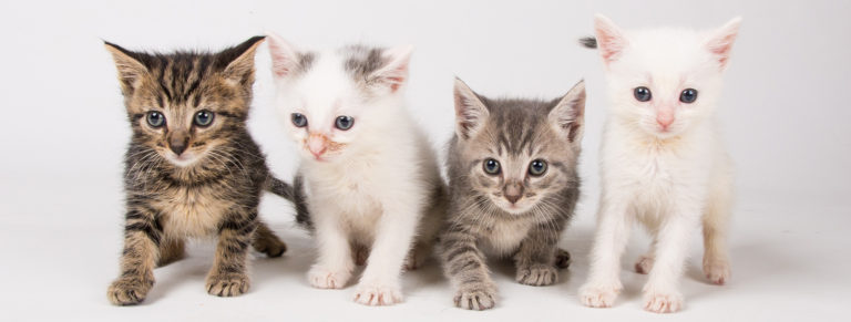 four kittens crawling