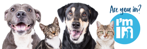 two dogs and two cats smiling at the camera