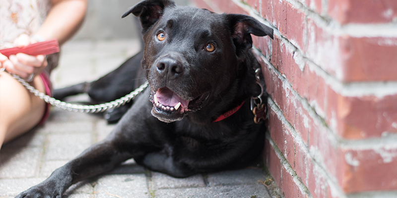 black dog laying on the ground and smiling