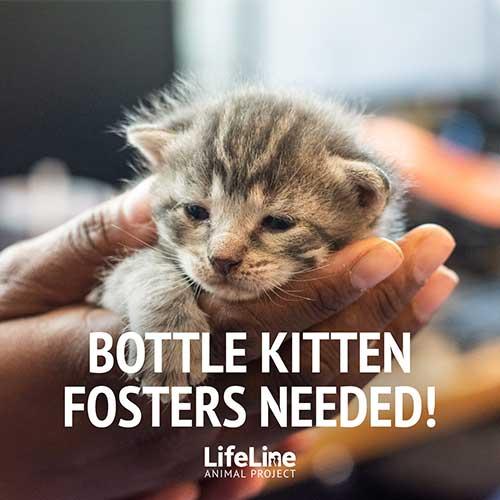 staff member holding a tiny kitten