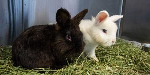 two rabbits sitting on hay
